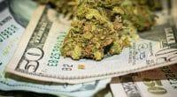 money making marijuana stocks
