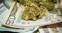 money making marijuana stocks