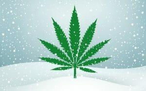 Pot stocks to watch winter