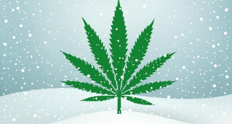 Pot stocks to watch winter