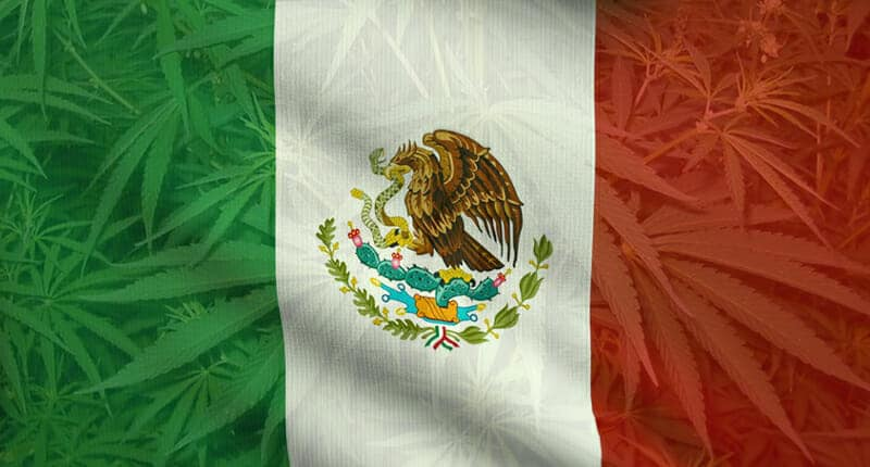 marijuana stocks mexico