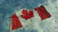 Canadian Pot Stock