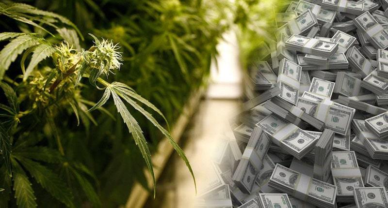 Marijuana stock money1