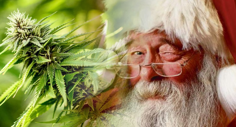 Marijuana stock santa