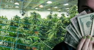 best marijuana stocks to buy now or sell