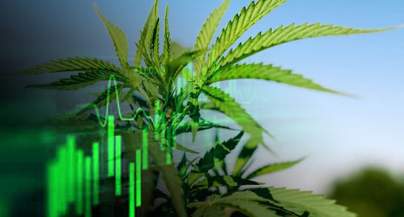 best pot stocks to watch now