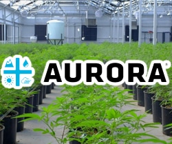 marijuana stocks on robinhood Aurora Cannabis (ACB)