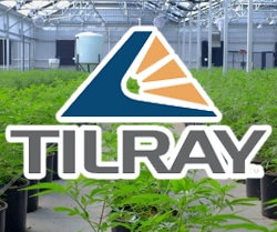 marijuana stocks on robinhood Tilray Inc. (TLRY)