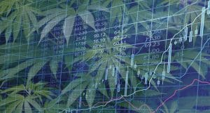 new pot stock chart