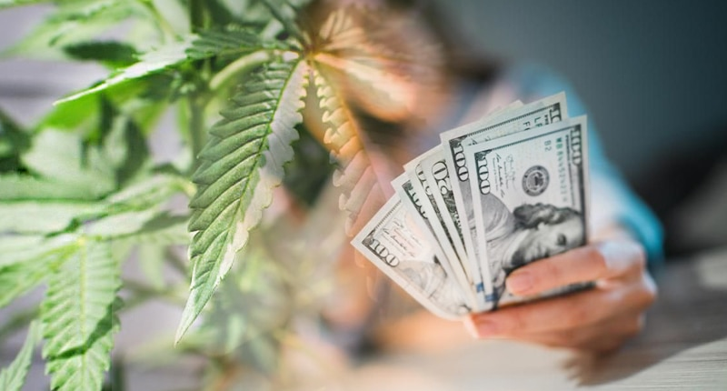 top marijuana stocks to make money