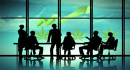 Pot stock to watch