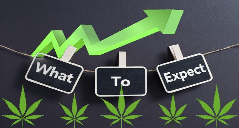pot stocks expectations