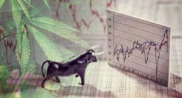 pot stock pic