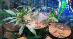 Marijuana stocks july