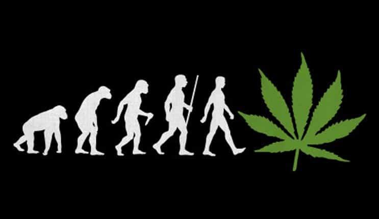 marijuana stocks evolution