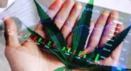 Marijuana Stocks Hand On