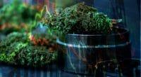 Marijuana Stocks MSO pot stocks
