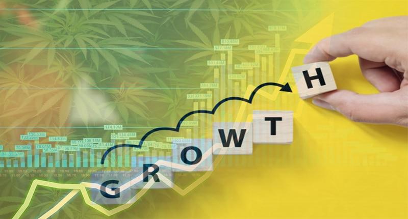 mj stock growth