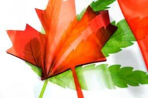 Canadian Marijuana Stocks