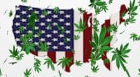 MSO Cannabis Industry