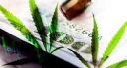 Marijuana Stock Gainers