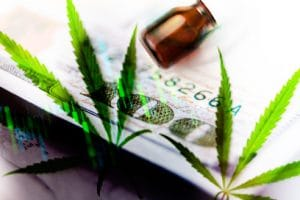 Marijuana Stock Gainers