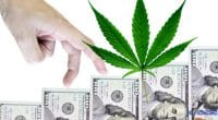 Marijuana Stock Revenue