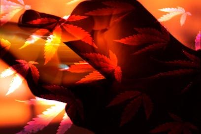 Marijuana Stocks to Buy copy