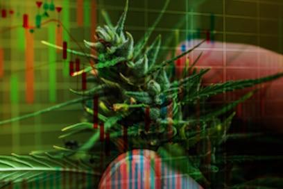 Pot Stocks to Buy marijuana stock chart