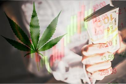 Top Cannabis Industry Stocks