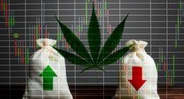 Top Marijuana Stocks To Watch in 2020