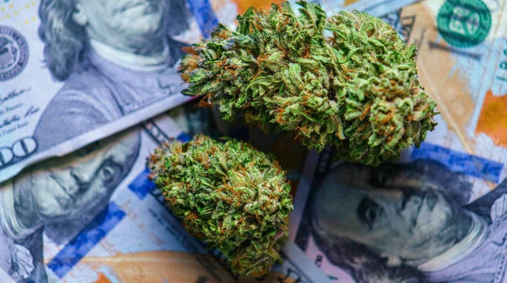 cannabis-buds-and-money-CBD-stocks-to-watch-ss-Feature