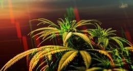 Cannabis Stock Watchlist 2021