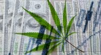 Cannabis Stocks to Watch Today