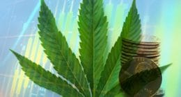 Marijuana Penny Stocks To Watch