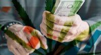 Marijuana Stock Watchlist