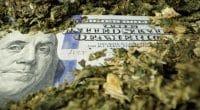 Marijuana Stock for 2020