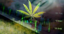 Top Marijuana Stocks To Watch Marijuana Leaf