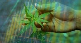Marijuana Stock To Buy Right Now
