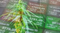 U.S. cannabis stocks for 2021