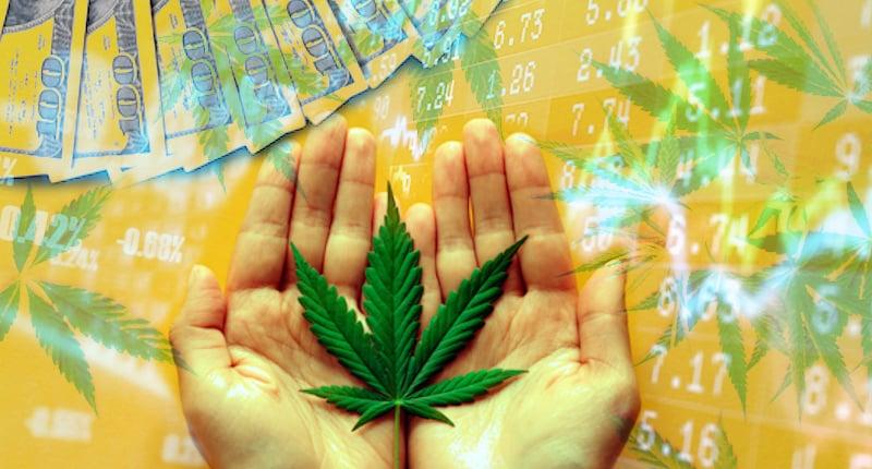 Best Marijuana Stocks To Watch January