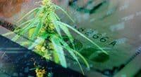 Best Marijuana Stocks To Watch Right Now 2021