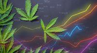 Marijuana Stocks Make Gains In January