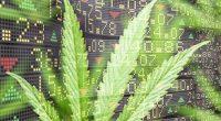 Top Marijuana Stocks To Watch In February 2021