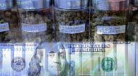 marijuana stocks in the U.S. cannabis industry