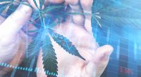Are These Cannabis Stocks The Right Investment