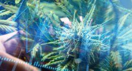 Best Marijuana Stocks To Watch Last Week Of February