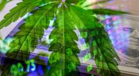 Cannabis Stocks In 2021 That Have Upward Momentum