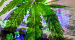 Cannabis Stocks In 2021 That Have Upward Momentum