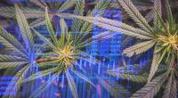 Cannabis Stocks In February To Add To Your Watchlist